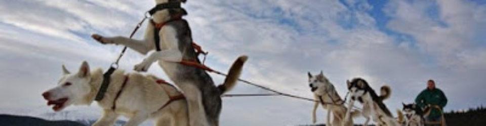 Dog_transport